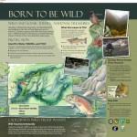 Wild River-Wild Trout 1 FINAL 5-23-13