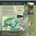 Wild River-Wild Trout 2 FINAL 5-23-13